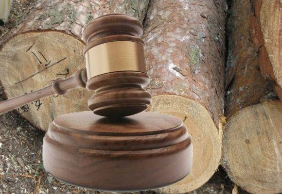 """Результат пошуку зображень за запитом """"«Леся, що ти робиш, це не твій лот, твій слєдующий»: суд скасував штраф за змову для торговця деревиною"""""""