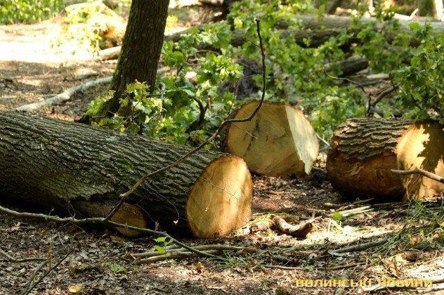 """Результат пошуку зображень за запитом """"обговорення стану охорони лісів від незаконних рубок та порушень природоохоронного законодавства"""""""